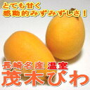 長崎産 温室 茂木びわ Lサイズ 1kg(6個入り250g×4パック入り箱)みずみずしくて上品に甘い♪初夏の風物詩 長崎特産のビワです ながさき 枇杷