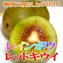 レインボウレッドキウイ 25個入り Lサイズ 約3kg 福岡産赤い果肉 酸味が少ない!甘いキウイフルーツ レッドサン 八女(やめ)