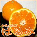 和歌山産「はるみ」(大玉15個前後入り)蜜柑のような概観。皮が薄くて食べやすい、甘い柑橘です。デコポンに近い風味です。(でこぽん/デコポン/みかん/ポンカン)