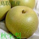 鳥取産 秋栄梨 (あきばえなし)5kg 特大サイズ 10〜12個入り 20世紀と幸水梨から誕生 新赤梨 希少品