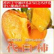 京都名産 代白柿(だいしろかき)大玉 15個入り甘さ抜群!お口でとろける果肉がとっても美味♪シャーベットにしても美味しいカキです【RCP】P14Nov15