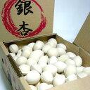 愛知産 銀杏 (ぎんなん) 2Lサイズ 500g(100個前後入り)秋の風物詩 土瓶蒸し 茶碗蒸し