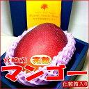 マンゴー 宮崎産 完熟マンゴー 超大玉 5Lサイズ 1玉 化粧箱 ○店長おすすめ果物です 希少品な特大サイズです 母の日 ギフト