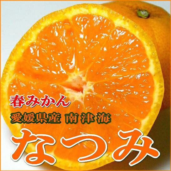 愛媛産 なつみ みかん 「南津海」 M〜Lサイズ 5kg 化粧箱糖度13〜14度以上!温州ミカンのように食べやすく、オレンジの香りととても甘い初夏の柑橘です(愛媛みかん 蜜柑 ミカン)