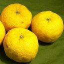 高知産 柚子(ユズ) 小玉 12〜13個前後入り和食の美味しさを引き立てる柑橘のゆずです 02P05Nov16