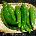 京野菜 万願寺とうがらし(まんがんじとうがらし)約1kg(3...