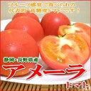 静岡・長野産アメーラトマト1kg甘いトマ