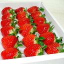 苺 さぬきひめ イチゴ 15個入り 化粧箱 香川産 ○ご贈答おすすめ果物です|ストロベリー いちご 御歳暮 御歳暮 2019 冬ギフト