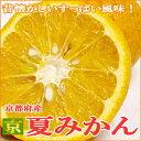 【産地直送!】京都産 京なつみかんMサイズ 約10kg (32個前後入り)すっぱいミカン 夏蜜柑 は昔懐かしい日本の柑橘です。酸っぱい柑橘 爽やか系 ※恐れ入りますが、希少品のためお届け日のご指定はいただけません。産直品のため同梱はいたしかねます。