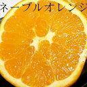 ネーブルオレンジ 16個入り 約3kg甘くてすっきり♪朝の始まりはスイートオレンジで!