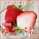 熊本産 ゆうべにイチゴ大玉 3Lサイズ 2パック入り箱 【ストロベリー】【ラッキーシール対応】