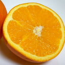 国産 ネーブルオレンジ Lサイズ 約10kg 50個前後入り 和歌山産 かんきつ