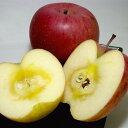 長野産 サンふじリンゴ 約5kg 大玉 14〜16個入り 林檎 アップル 信州りんご 甘いりんご サ