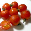 京都産 オーガニック・ミニトマト 約1kg(100個前後入り) 有機栽培 ミニトマト プチトマト