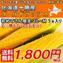 1,000円ポッキリ&送料無料 ゴールドラッシュ大振り3L〜...