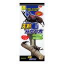 三晃商会 天然分かれ木 T05 (昆虫用木製品) 【ネコポス不可】