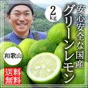 レモン 無農薬 国産 2kg 送料無料 グリーンレモン 青レモン 和歌山産 有機栽培 レモン