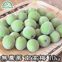 梅 南高梅 無農薬 10kg 熟梅 黄色梅 送料無料 梅酒 梅干し 梅酢 梅シロップ 酵素ジュ