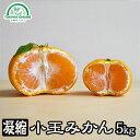 みかん 小玉 5kg 訳あり 送料無料 小玉 愛媛 八幡浜 ...