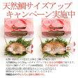 お食い初め天然鯛サイズアップキャンペーン実施中(お食い初めセット料理「壱」または「参」の同時ご注文限定)鯛塩焼き(天然鯛姿焼き)サービス価格で大きく変えられます