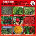 三養 三養ラーメン 120gx1個 /日本語版