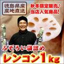 徳島県産高級レンコン1kg袋詰め!訳ありでお得♪同梱OK!【10月〜1月頃の冬季限定販売】【国産野菜】【産地直送】