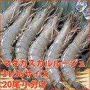 マダカスカルルージュ 31/35 20尾小分け(約30g/尾)