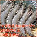 マダカスカルルージュ 31/35 10尾小分け(約30g/尾)