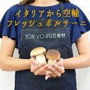 【季節限定】フレッシュ ポルチーニ <イタリア産>porcini【100g】【100g/\1400再計算】【冷蔵品】