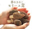 フレッシュ モリーユ モリーユ茸 (アミガサ茸)きのこ キノコ <トルコ産>【10
