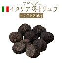 フレッシュ 冬トリュフ (黒トリュフ) エクストラ アンジェロッツィ社 truffe トリュフ <イタリア>
