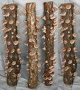 11月下旬入荷予定 ホダ木 オガ菌 完熟 ホダキング45cm しいたけ SFJ321x 菌王2号(F206) 1本 送料無料 家庭菜園 生食 シイタケ 椎茸 しいたけのなる木 ハロウィン お歳暮