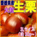 【愛媛県大洲産】でっかい生栗(大粒 3L以上)1kg