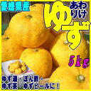 送料無料【愛媛県産】(格安・訳あり)柚子 5kg (キズ等あり) [ゆず・ユズ・家庭用]