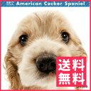 【お取寄せ品】アーリスト THE DOG カレンダー アメリカン・コッカー・スパニエル【送料無料】