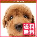 【お取寄せ品】アーリスト THE DOG カレンダー プードル【送料無料】