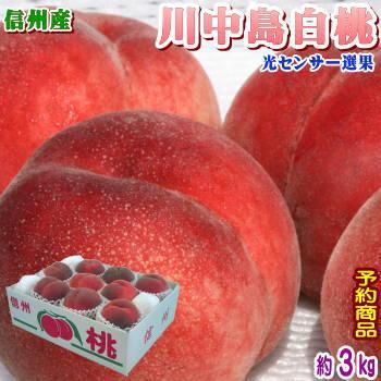 【予約】【クール便無料】長野県産 川中島白桃 約3kg(10-13玉前後)信州原産の濃厚でジューシーな桃!光センサーで糖度チェック!甘い桃だけお届けします!お届けは8月下旬頃〜