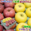 【クール便】【CA貯蔵】【送料無料】長野県産 りんご詰合せBランク(マル特)約5kg(12-