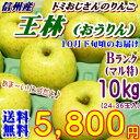 【送料無料】長野県産 王林(おうりん) Bランク(マル特)10kg(24-36玉)長寿の国!信州から贈る独特の甘い香りと甘味が味わえるりんご♪