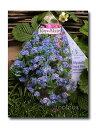 【Royalfleur】ワスレナグサ「Royal Bleu」