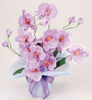 光触媒造花アレンジ 光の楽園 ホットファレノ 3A2314-25