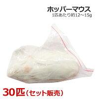 冷凍ホッパーマウス30匹