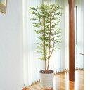 光触媒の人工観葉植物!C3802-300 ゴールデンリーフ H180cm観葉植物 造花 光触媒