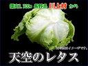 川上村 天空のレタス 4個
