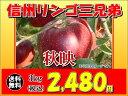 Foods - 須坂市 山吉果樹園 信州リンゴ「秋映」3kg
