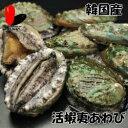 【活】活蝦夷あわび (90〜100g)
