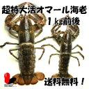 【活】超特大 活オマール海老約1キロ(900g〜1,100g)【アメリカンロブスター】