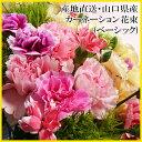 母の日 花束 「ポイント2倍」★カーネーション花束・ベーシック(約15本)