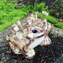 信楽焼 10号蛙 縁起物カエル 陶器蛙 やきもの 陶器 しがらきやき 蛙 陶器かえる 信楽焼カエル かえる 庭 カエル やきもの 金運 しがらき 六匹蛙 ka-0068