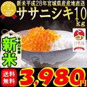 ���ơ� 28ǯ�� �ܾ븩�� �����˥��� 10kg ����ܸ��������������Ź������,5ʬ,7ʬ,������(���ƻ�������1�为) ���ơ�